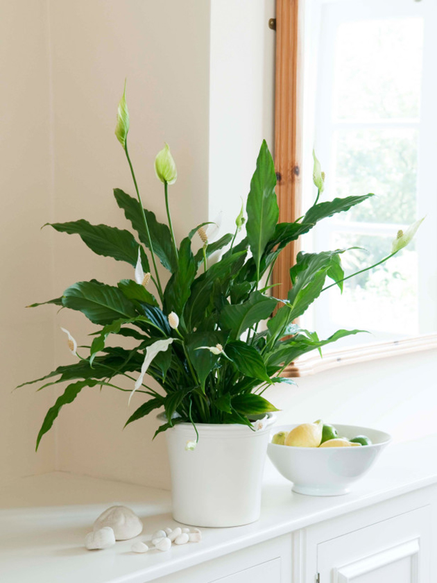 5 Pretty Houseplants that Improve Air Quality