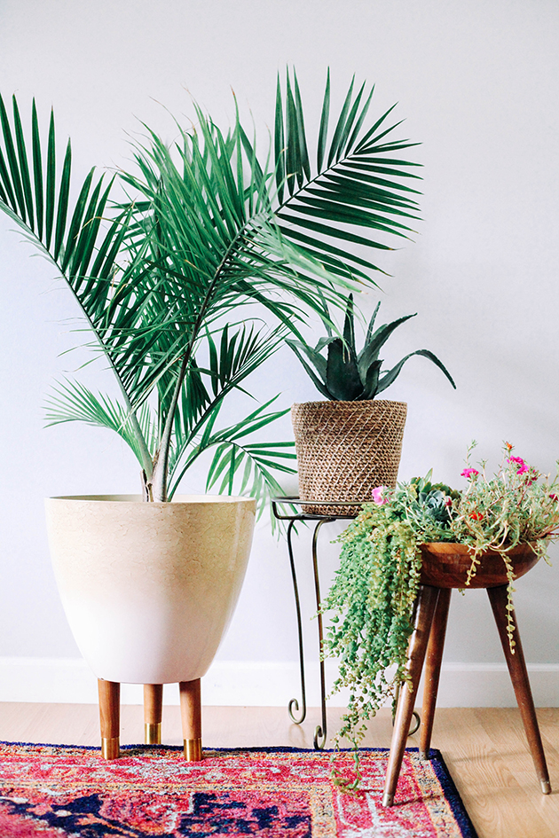 Fixer upper friday 5 pretty houseplants that improve air quality arsenic old place - Pretty indoor plants ...